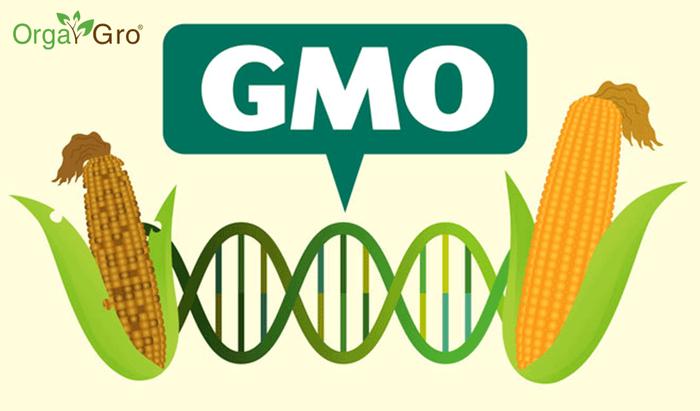О том, почему же люди боятся ГМО гмо, мифы, образование, опасность