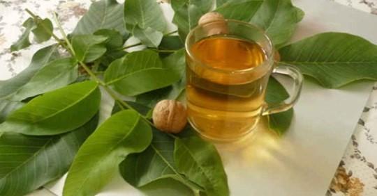 Листья грецкого ореха для укрепления здоровья: рецепты и способы применения