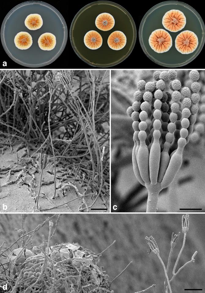 10 новых биологических видов 2014 года
