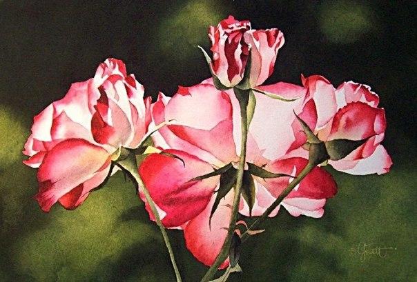Цветы в акварелях от художника Jacqueline Gnott