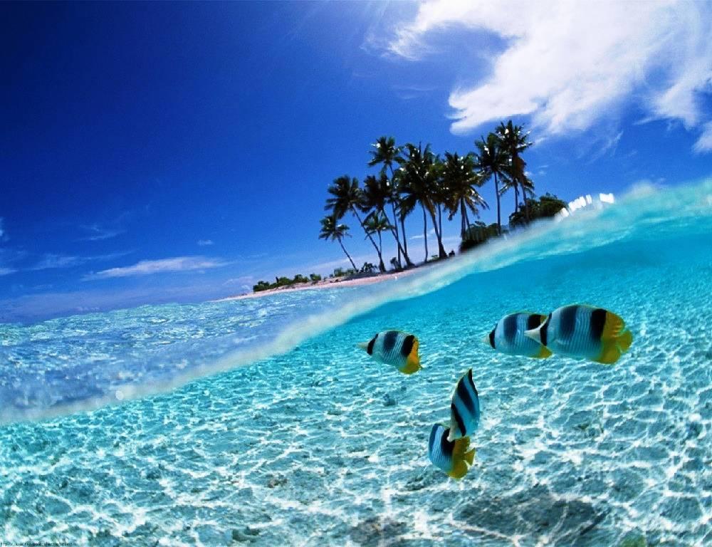 Одно из любимых туристических направлений у россиян - остров Бали