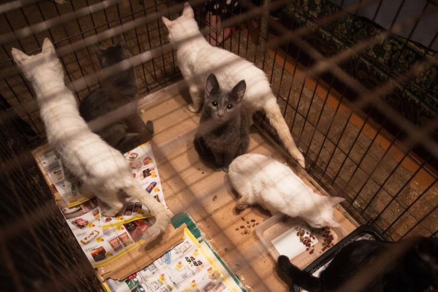 36 кошек в маленькой комнатке! Новосибирские волонтёры спасли животных, которых содержали две престарелые сестры