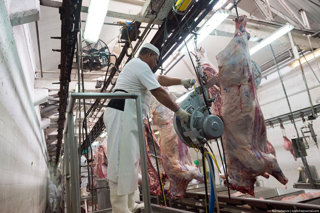 Скотобойня: вид изнутри. Откуда берется мясо
