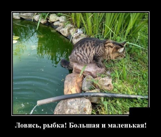Образ кошки в демотиваторах))