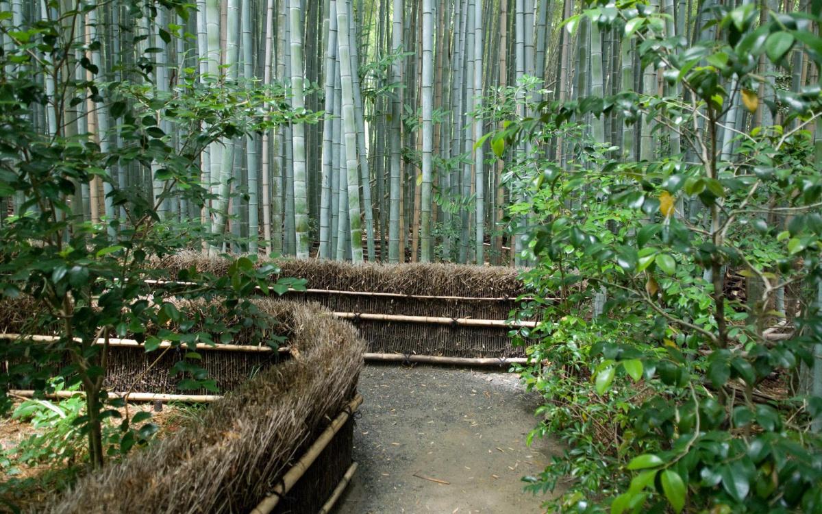 Бамбуковая роща Сагано. Тропинка.