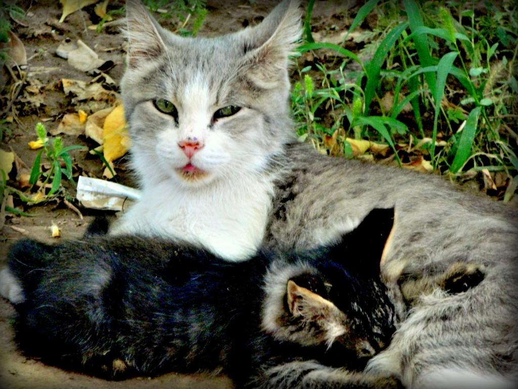 Мама-Кошка