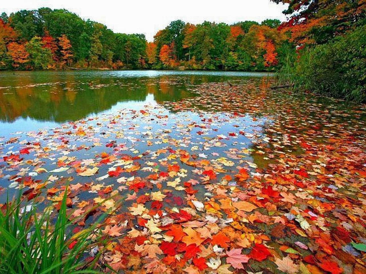 Картинки по запросу так красиво засыпает осень