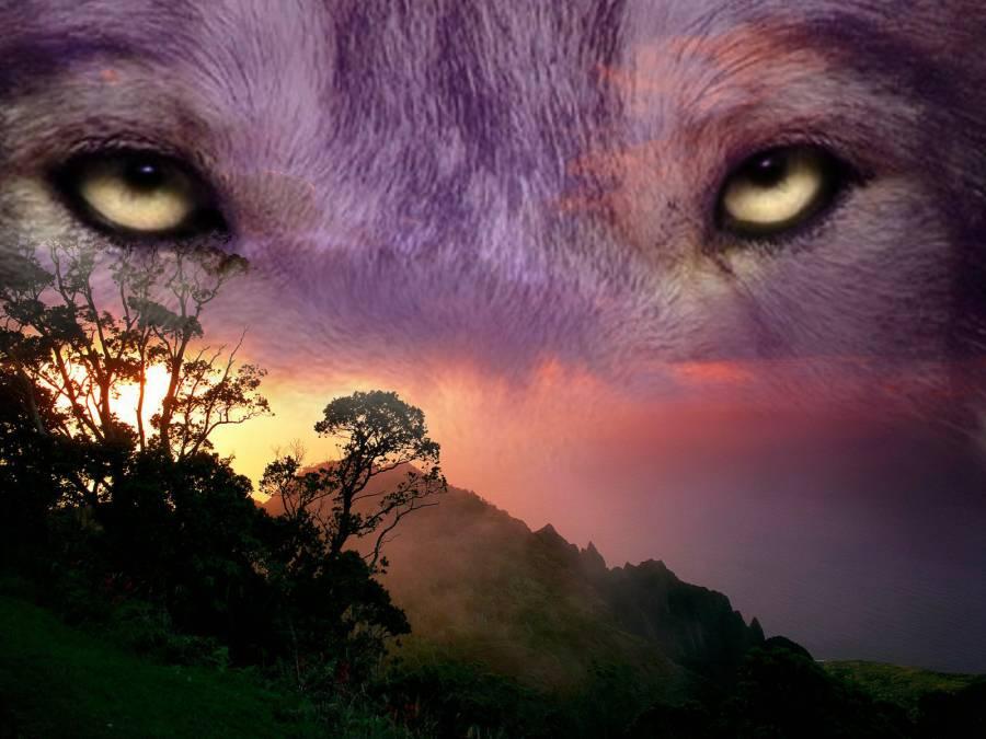 И зверя нет страшней, чем человек!  Лучшая история о том, как изменить мир вокруг себя!