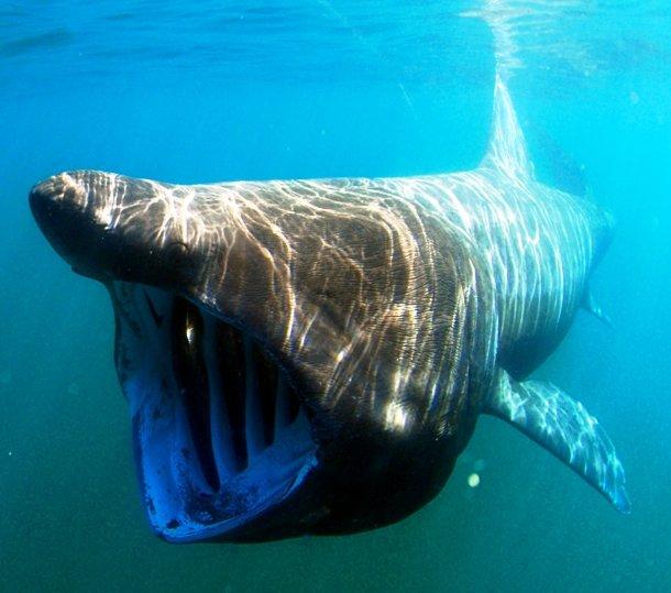 25 самых страшных животных, которых вы не захотите увидеть случайно ночью