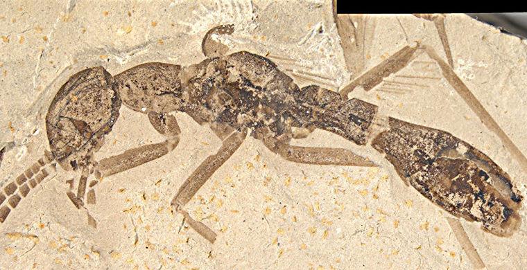 Российские ученые нашли «тараканомуравья» в Бирме