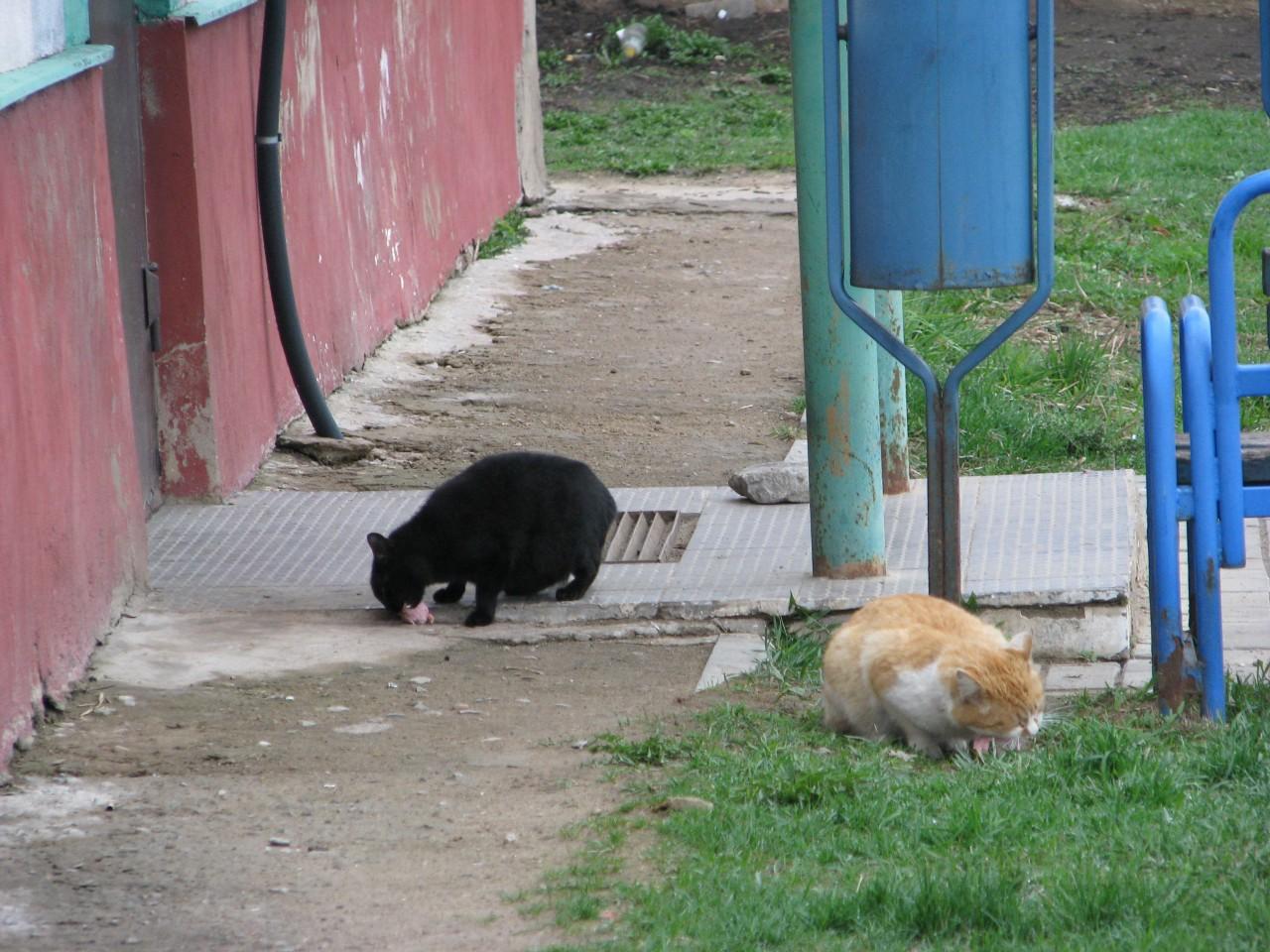Братья наши меньшие: так сколько может съесть кот?
