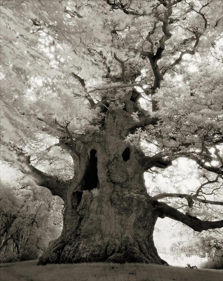 Деревья древние как мир в фотографиях из 14-летнего путешествия-16