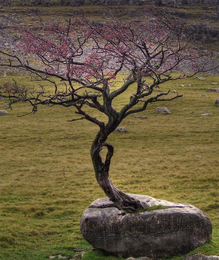 Проросло сквозь дерево дерево, живучесть, жизнь, мир, планета, растительность, фото
