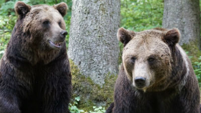 В Якутии женщина родила ребенка в тайге, пока полицейский отгонял от нее медведей