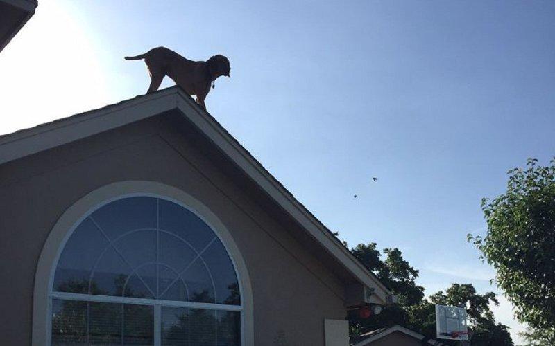 Собака придумала невероятный способ приветствовать хозяина