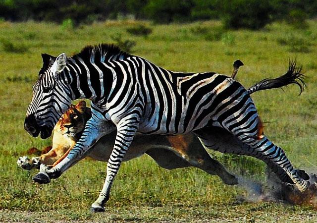 Удивительные животные с самой необычной кожей