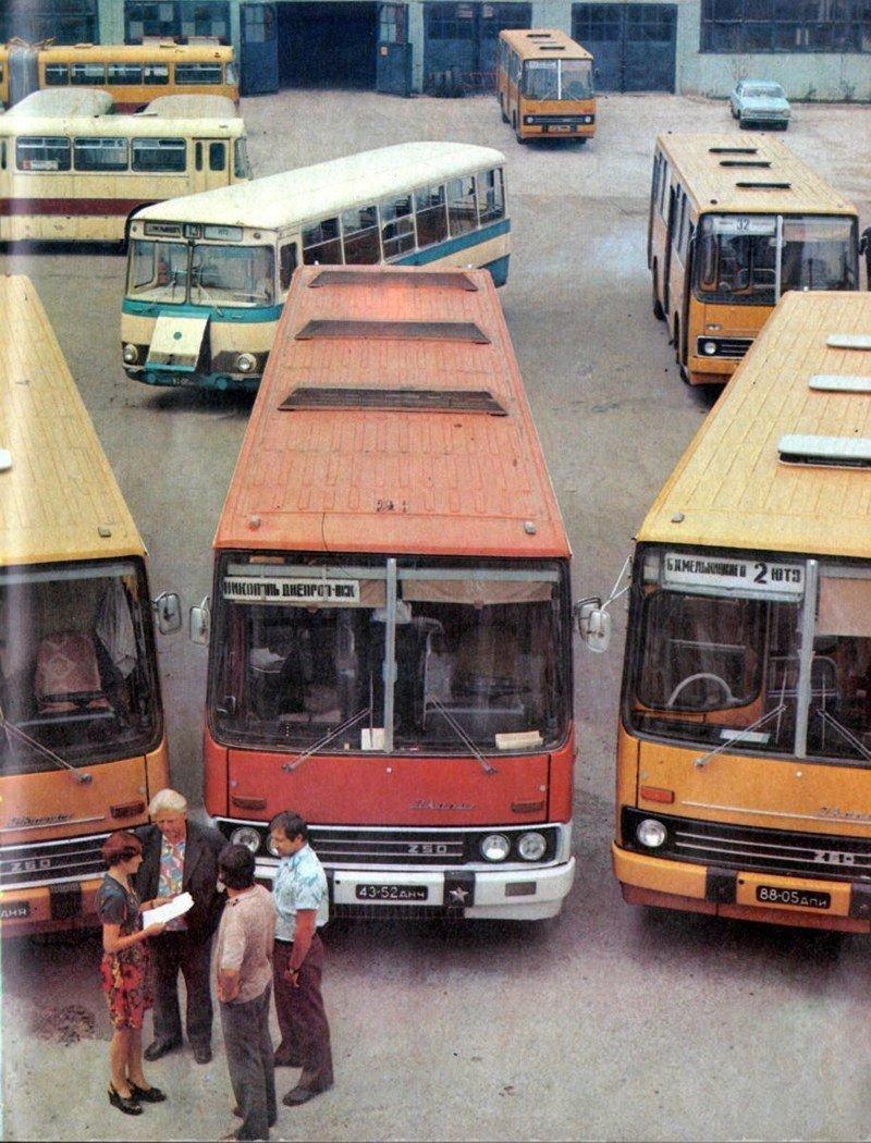 Отряд автобусов из Никопольского АТП. ЛАЗ, СССР, авто, автобус, автомобили, зил, лиаз, советский автопром