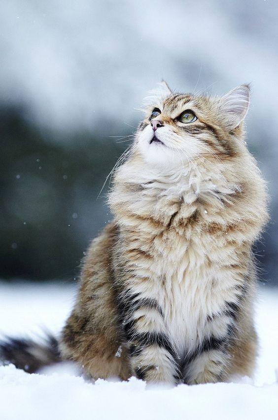 Стерилизация кошек: методы и уход за животным после операции