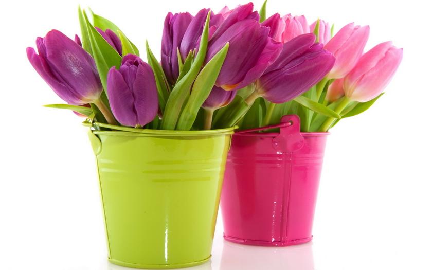 ведерко, тюльпаны