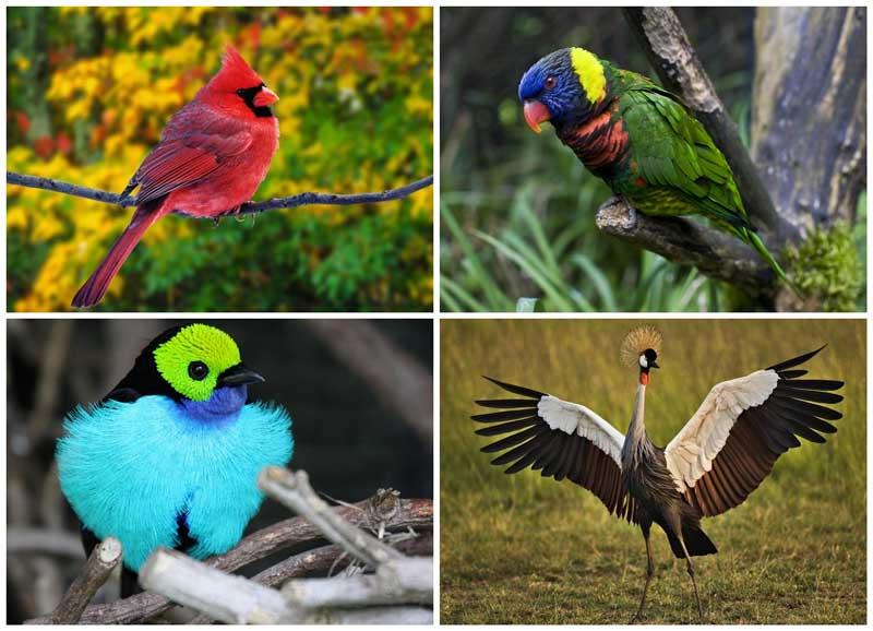 BIGPIC22 Топ 10 самых красивых птиц в мире