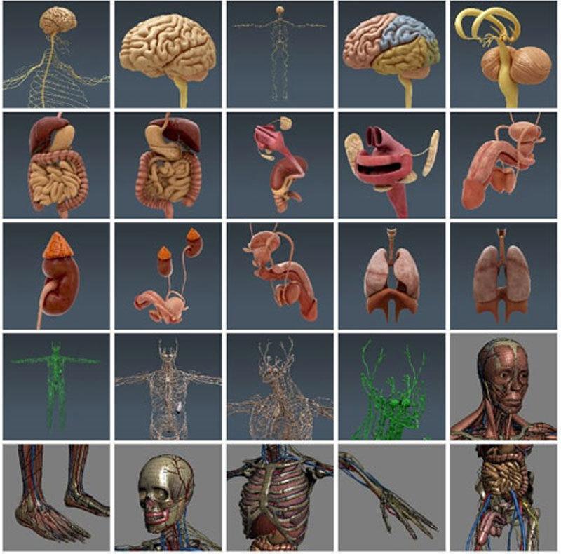 Пока не поверите, что в Вашем организме каждая клеточка живая — ничего не поменяется!