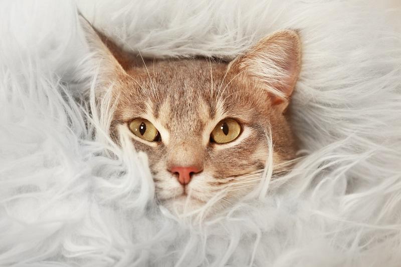 опасна ли кошка в доме