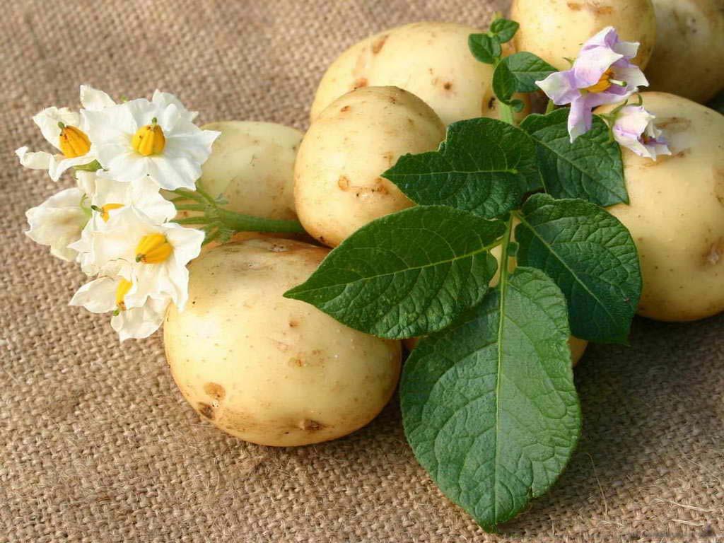 Приправа для картошки
