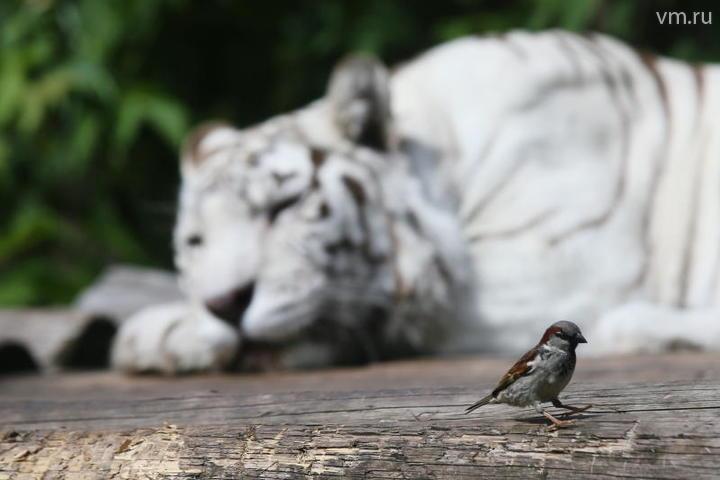 Столичные власти откроют интерактивный зоопарк в Великом Устюге