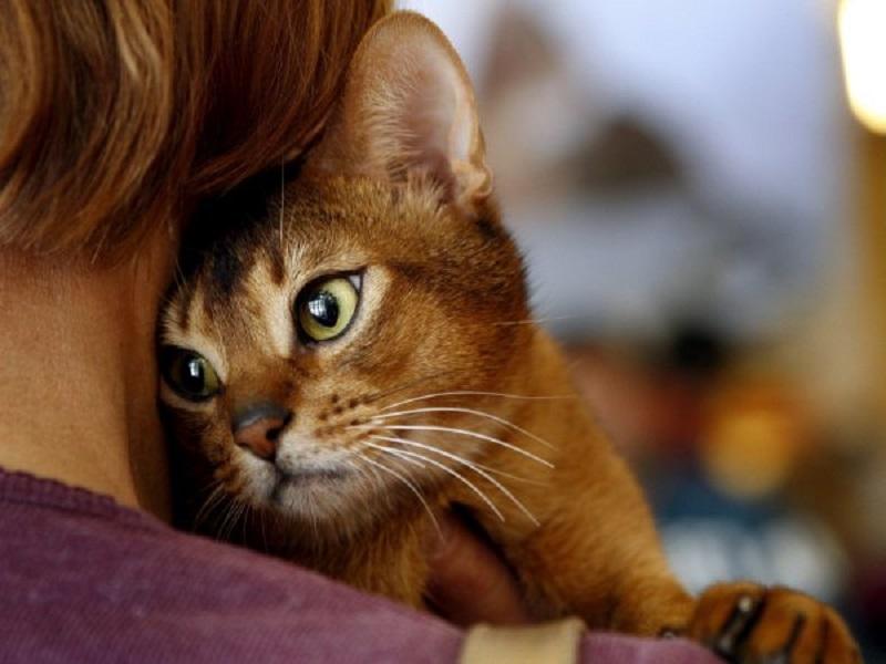 Вот какие болезни способна вылечить ваша кошка