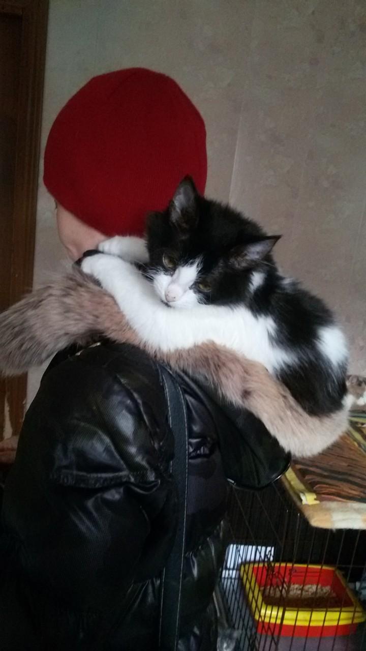 Котят тоже приносят аисты) Лиза ищет дом!
