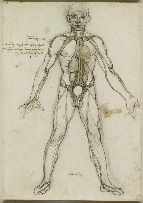 Об этом мало кто знает... Анатомические рисунки Леонардо да Винчи.