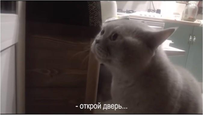 «Открооой мне!»: говорящий к…
