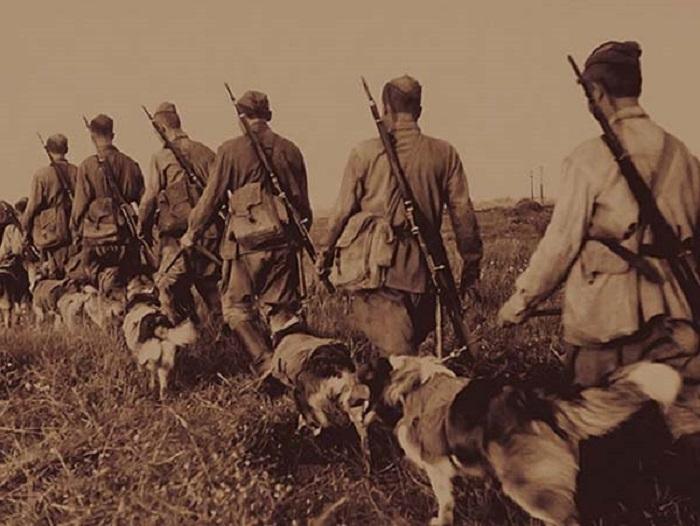Во время Великой Отечественной войны собаки проявляли отвагу и героизм наравне с людьми.