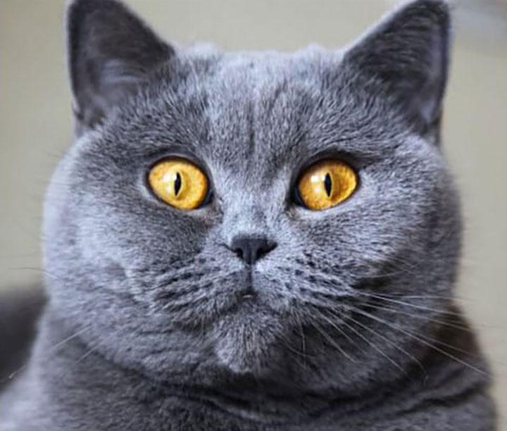 Порода кошек, подходящая вам…