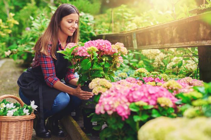 5 красивых комнатных растений, которые украсят квартиру и не потребуют много внимания