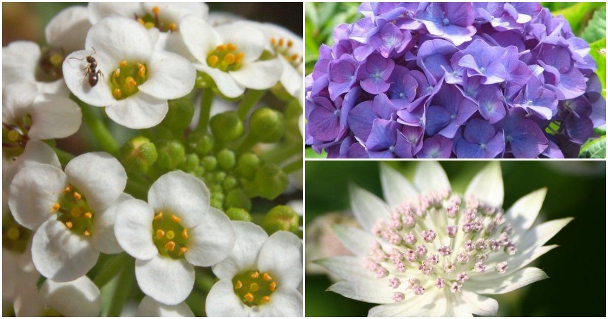 10 цветущих растений, которые замечательно уживаются в тени