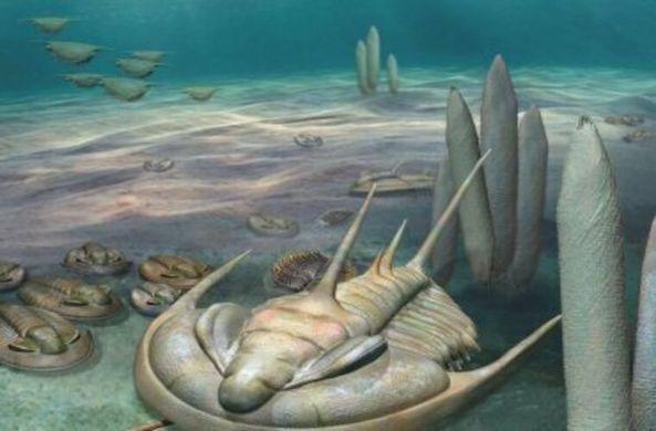 В Австралии нашли окаменелости короля членистоногих