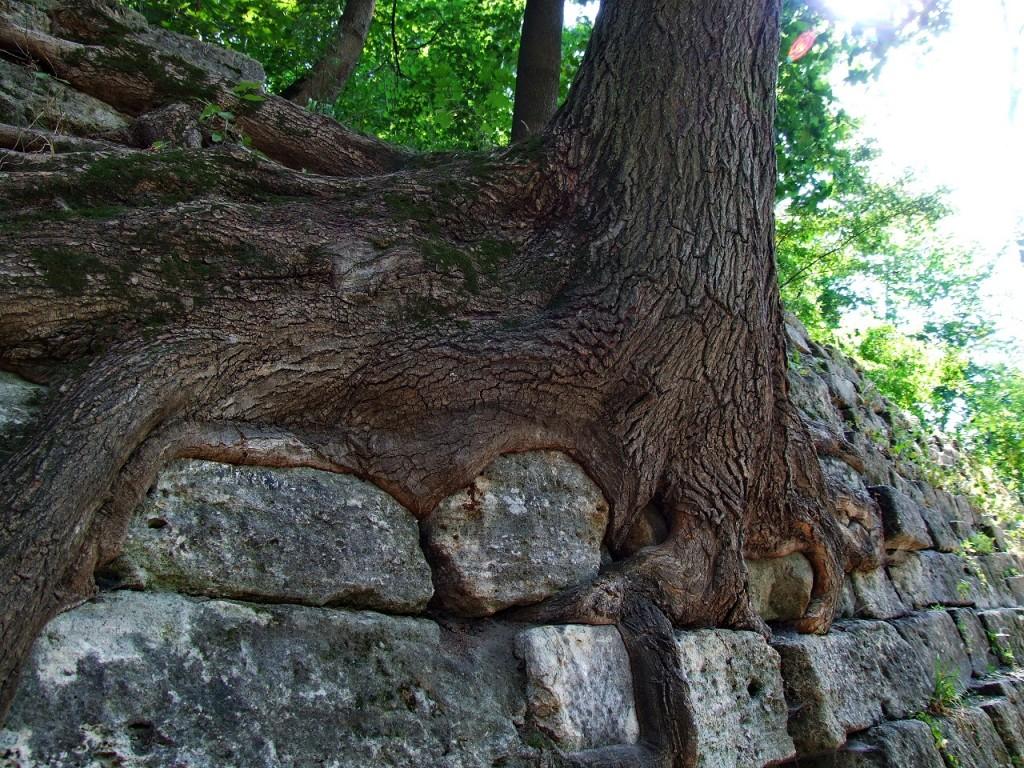 фотографии на дереве в интерьере