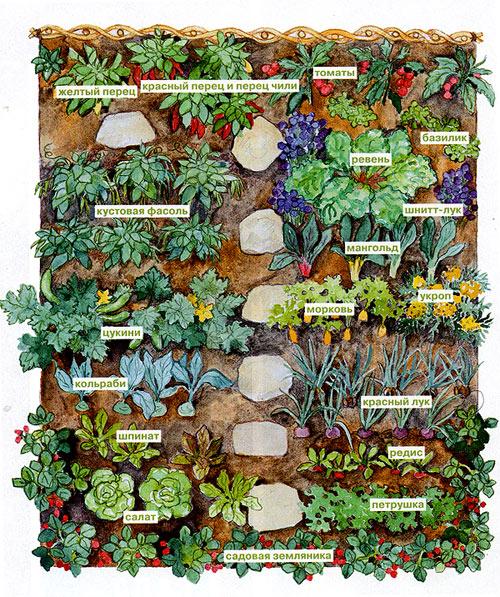 план посадок огорода