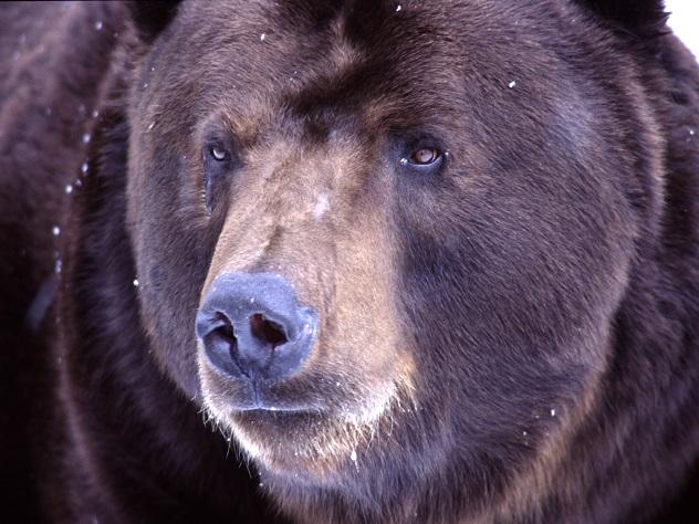 Иностранные зоозащитники осудили шоу с медведем на футбольном матче в России