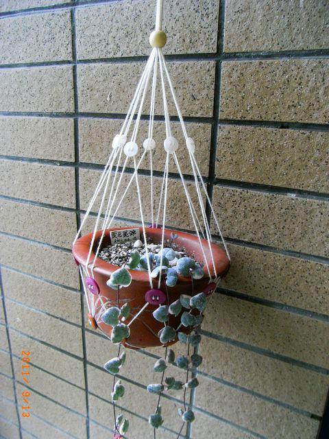 Сетка для подвешивания цветов: шнур и пуговицы