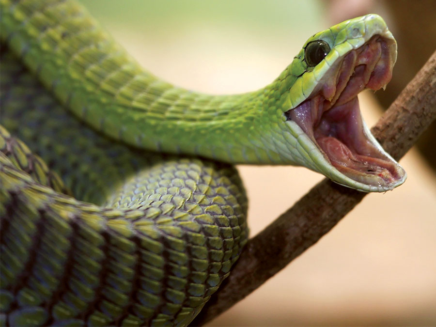 Шокирующие истории о том, как люди погибли от нападения змеи. Часть 1