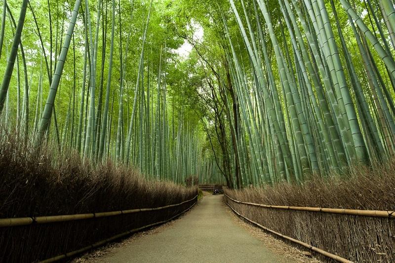 Бамбуковая роща Сагано. Ограждение из сухого бамбука.