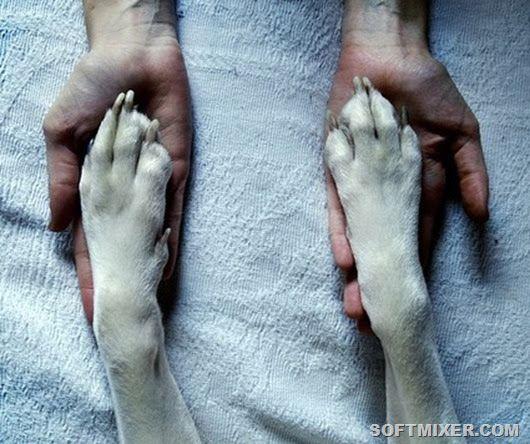 Преданней собаки нету существа… собаки, верность, преданность