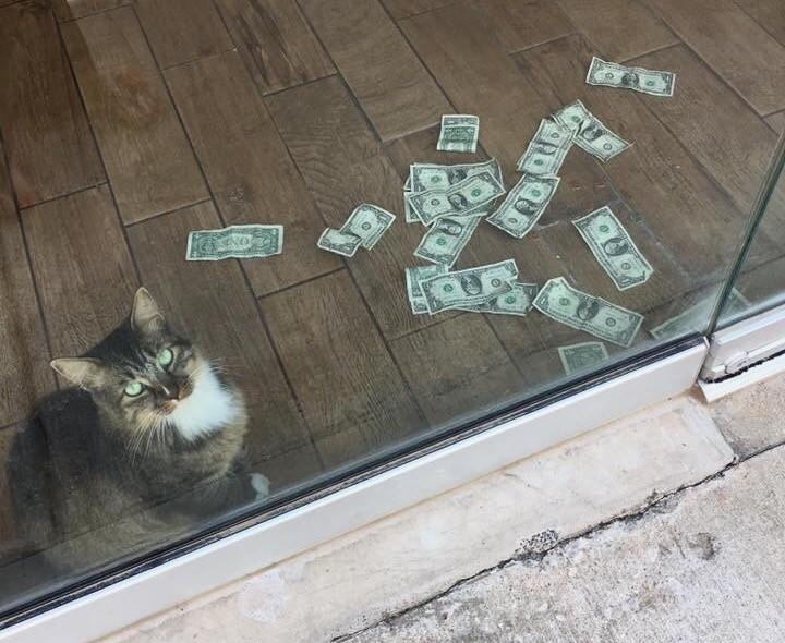 Осторожно! Кот-гопник из Оклахомы заберёт все ваши денежки