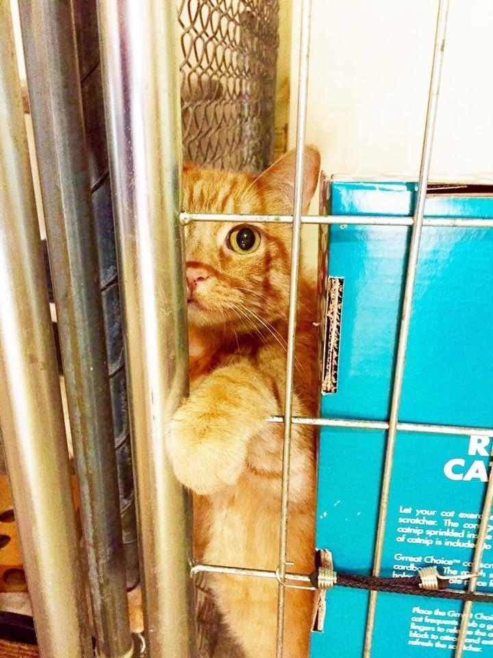 Картинки по запросу Пара преодолела более 5600 километров, чтобы спасти кота!