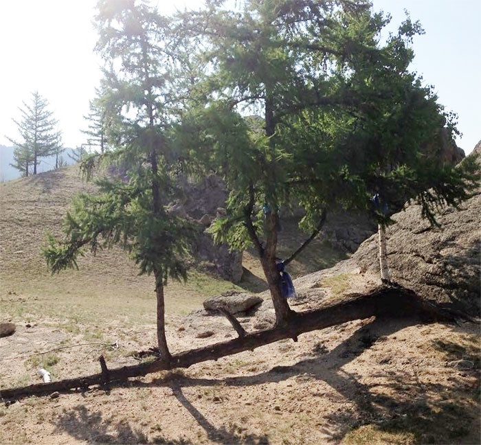 Ветки превратились в деревья дерево, живучесть, жизнь, мир, планета, растительность, фото