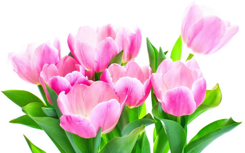 весенний букет, тюльпаны