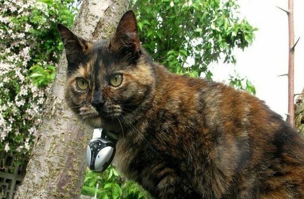 Ученые выяснили, что с людьми и в одиночестве кошки ведут себя по-разному