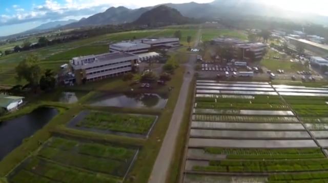 Зачем людей сознательно травят ГМО-продуктами